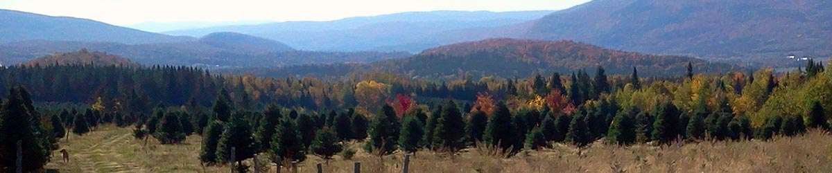 Beloin Tree Farm View