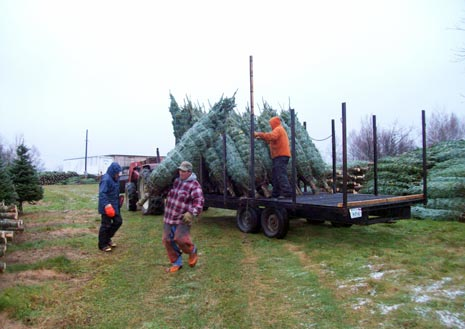 Christmas Tree Shipping